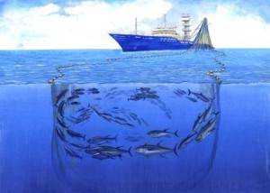 Artists conception of purse seining operation