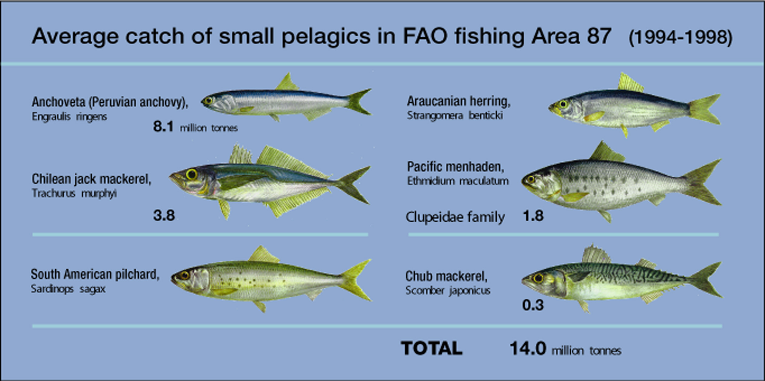 'Some of the species caught mainly for reduction to fishmeal and oil