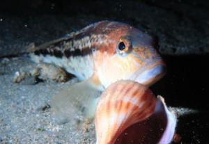 fish sentience