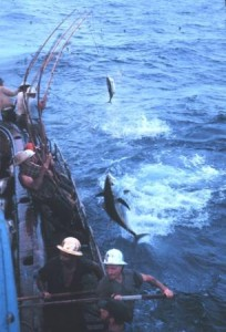 Left: Bigeye tuna caught by pole-and-line fishing.